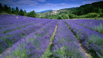 Flowers fields france lavender wallpaper