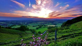 Flowers pink grass hills valleys burst skies wallpaper