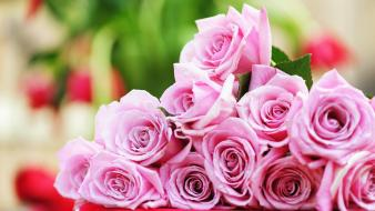 Flowers pink roses Wallpaper