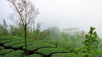 Green nature houses fog landspaces wallpaper