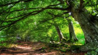 Green nature trees pathway wallpaper