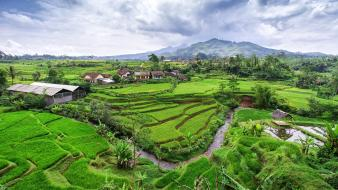 Hills rice java indonesia creek terraces terrace Wallpaper