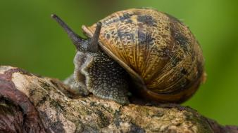 Macro molluscs mollusks nature snails wallpaper