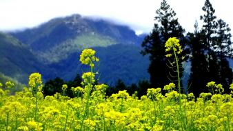 Mountains clouds landscapes nature trees flowers hills yellow Wallpaper