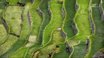 Nature terrace agriculture rural countryman rice terraces Wallpaper