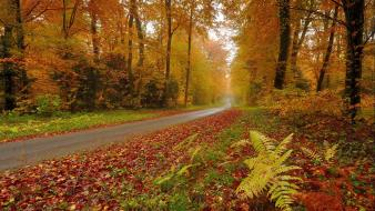 Nature trees autumn forests orange leaves roads wallpaper