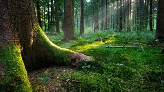 Nature trees forests sunlight wallpaper