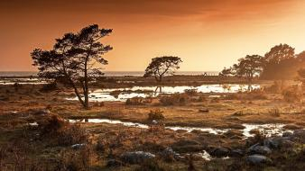 Ocean landscapes nature trees grass golden puddles wallpaper