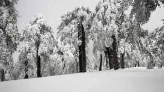 Snow trees cyprus troodos Wallpaper