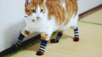 Socks pets stripes domestic cat striped legwear Wallpaper