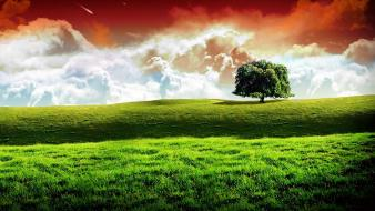 Trees grass fields manipulations Wallpaper