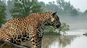 Water trees animals wildlife jaguar rivers wallpaper