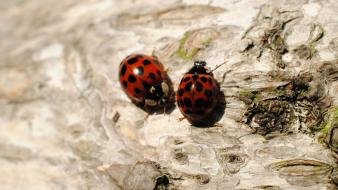 Wood insects macro ladybirds wallpaper