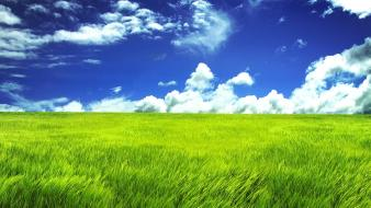 Green Grassland wallpaper