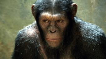Rise Of The Planet Of The Apes Movie wallpaper
