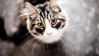 Cats animals depth of field looking up wallpaper