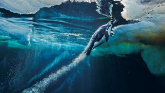 Ice nature penguins national geographic launch underwater speed wallpaper