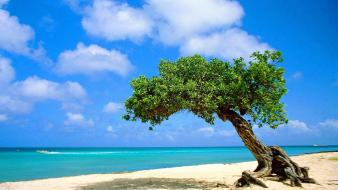 Landscapes nature trees aruba Wallpaper