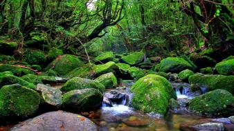 Landscapes nature trees rain forests creek after wallpaper