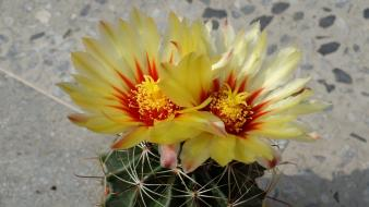 Nature flowers plants cactus wallpaper