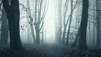 Trees dawn fog mist alley park forest wallpaper