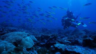 Animals diver fish coral scuba diving exploration wallpaper