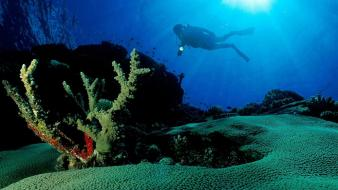 Animals diver sunlight coral underwater exploration wallpaper