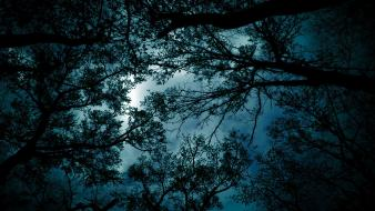 Blue landscapes nature trees night evening branches wallpaper