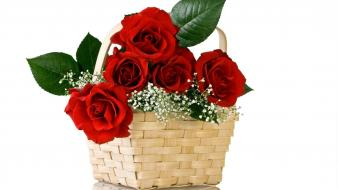 Flowers baskets roses wallpaper