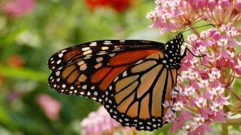 Flowers insects butterflies wallpaper