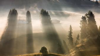 Landscapes nature trees forests hills fog 1924 dawning wallpaper
