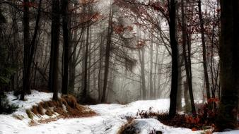 Landscapes nature winter snow trees forests fog november wallpaper