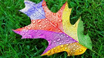 Leaf artistic multicolor grass waterdrops wallpaper
