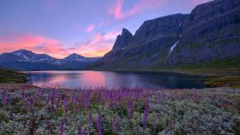 Mountains landscapes flowers norway europe Wallpaper