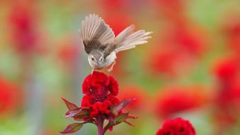 Nature birds red flowers wallpaper