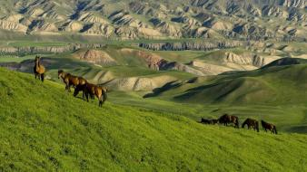 Nature china animals grass brown horses pasture wallpaper