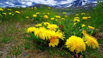 Nature meadows dandelions wallpaper