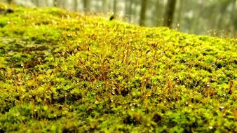 Nature moss water drops macro wallpaper