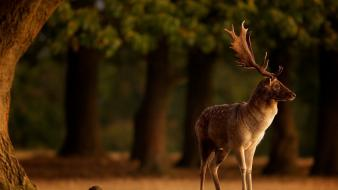 Nature trees animals deer national geographic wallpaper