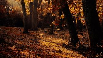 Nature trees autumn forests leaves fallen wallpaper