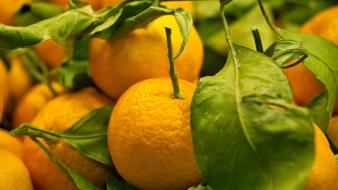Orange fruits strong fresh vitamins wallpaper