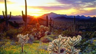 Sunset landscapes nature desert cactus wallpaper