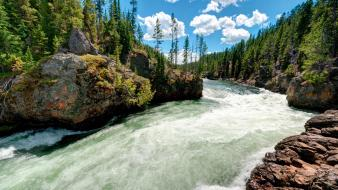 Trees usa wyoming rivers yellowstone national park Wallpaper