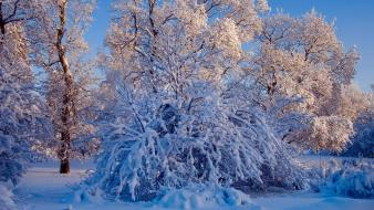 Winter snow trees landscapes wallpaper