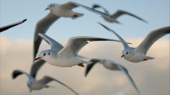 Birds seagulls wallpaper