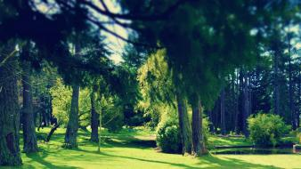 Green nature trees parks photo filters wallpaper