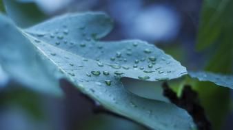 Leaves depth of field dew waterdrops wallpaper