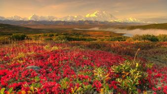 Mountains landscapes nature rivers snowy peaks wild flowers wallpaper