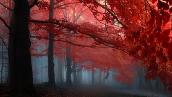 Paths fog melody mystical dawning autumn leaves wallpaper