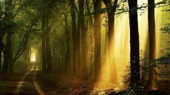 Sunrise landscapes nature forests sadness pathway wallpaper